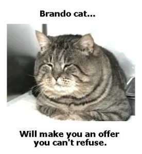 brando cat will make you an offer you can't refuse