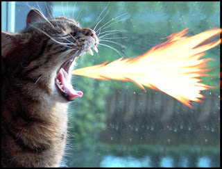 Fire breathing cat
